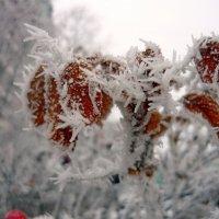 Зима пришла :: Вера Щукина