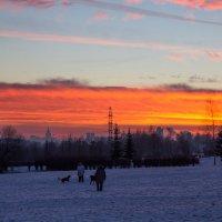 С собаками гулять нужно при любой погоде... :: Владимир Безбородов