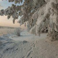 Вдоль берега Енисея :: Сергей Герасимов