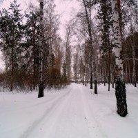 Зимушка в лесу. :: Мила Бовкун