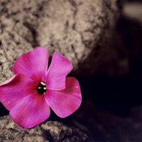 Жизнь среди камней :: Виолетта Насанович