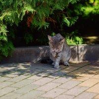 Случайный котик :: Наталья Кузнецова