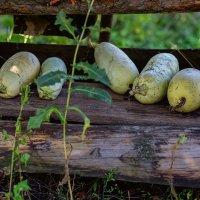 Урожай :: Наталья Кузнецова