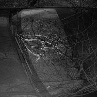авто-лес3 :: Дмитрий Потапов