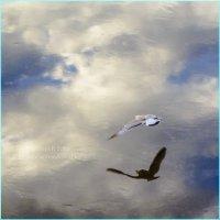 Чайка над водой.2016 :: Артём Бояринцев
