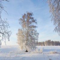 одинокая :: Николай Мальцев