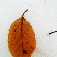 Осенний лист на снегу :: Татьяна Королёва