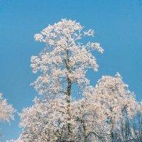 Уголок зимнего парка :: Сергей Тарабара