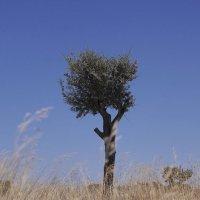 дерево :: Николай Рогаткин