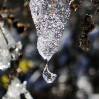 Ледяной кулон :: Геннадий Г.
