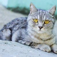 Котейка в поисках дома :: Asya Piskunova