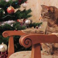 Елка и кошка :: Элен Шендо