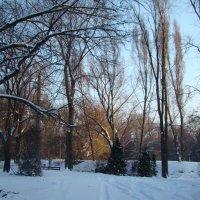 В Ботаническом саду в декабре... :: марина ковшова