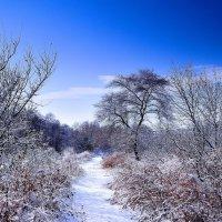 Первый снег. :: Сергей