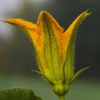 Цветок :: Геннадий Г.