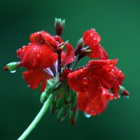 После дождя :: Светлана Стрижова