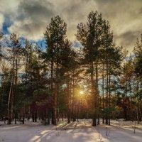 Солнце за лесом :: Андрей Дворников