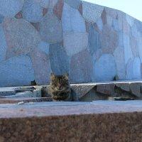 Кот на страже :: Евгения Коркунова