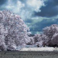 Перед грозой. :: Александр Криулин