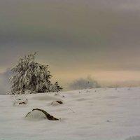 Одинокая, унылая сосна. :: Ольга
