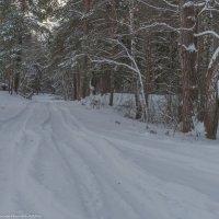 Зимняя дорога в лесопарке. :: Виктор Евстратов
