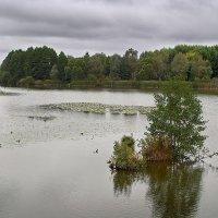Подводный островок. :: Андрий Майковский