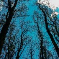 В лесу :: Вадим Шинкарь