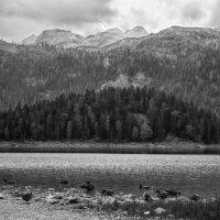 Черногория. Черное озеро :: Владимир Печенкин