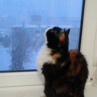 Снова кружатся снежинки за окном... :: Татьяна