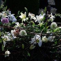 Цветы Харлема :: Валентина Харламова