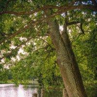 Лиричный уголок у Большого пруда, Екатерининский парк :: Julia Martinkova