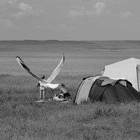 Человек-птица. :: Наталья Юрова
