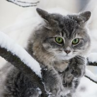 Хорошо висим! :: Ирина Приходько