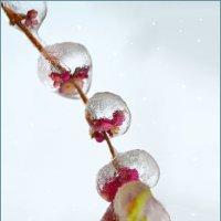 Ледяная гирлянда :: Nina Streapan