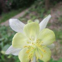 Интересный цветок :: Дмитрий Никитин