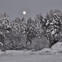 Морозным вечером. :: Галина .