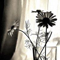Набросок поэзии зимней... :: Tatiana Markova