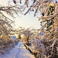 зимний сад :: Сергей А. Петров