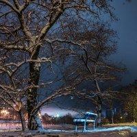 Зимний ночной... :: Инга Мысловская