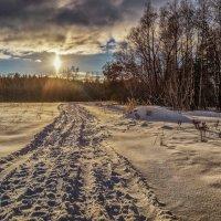 Солнце над лесом :: Андрей Дворников