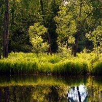 Вид на Совиный ручей в контровом свете :: Иван Миронов