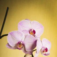 Декабрьский цветок :: юрий Амосов