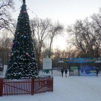 Декабрь,вечер у входа в парк... :: Тамара (st.tamara)
