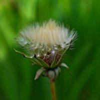 Для вас цветочек..) :: ЕВГЕНИЯ