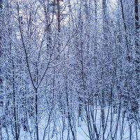 сумерки декабря :: Евгения Куприянова