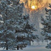 Зимняя стужа :: Екатерина Торганская
