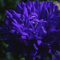 Цветок :: Julia Volkova