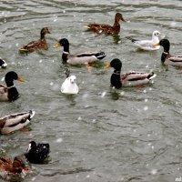 Снегопад и птицы :: Нина Бутко