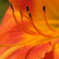 Есть душа у каждого цветка... :: Swetlana V