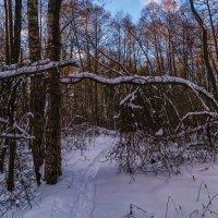 В зимнем лесу :: Андрей Дворников